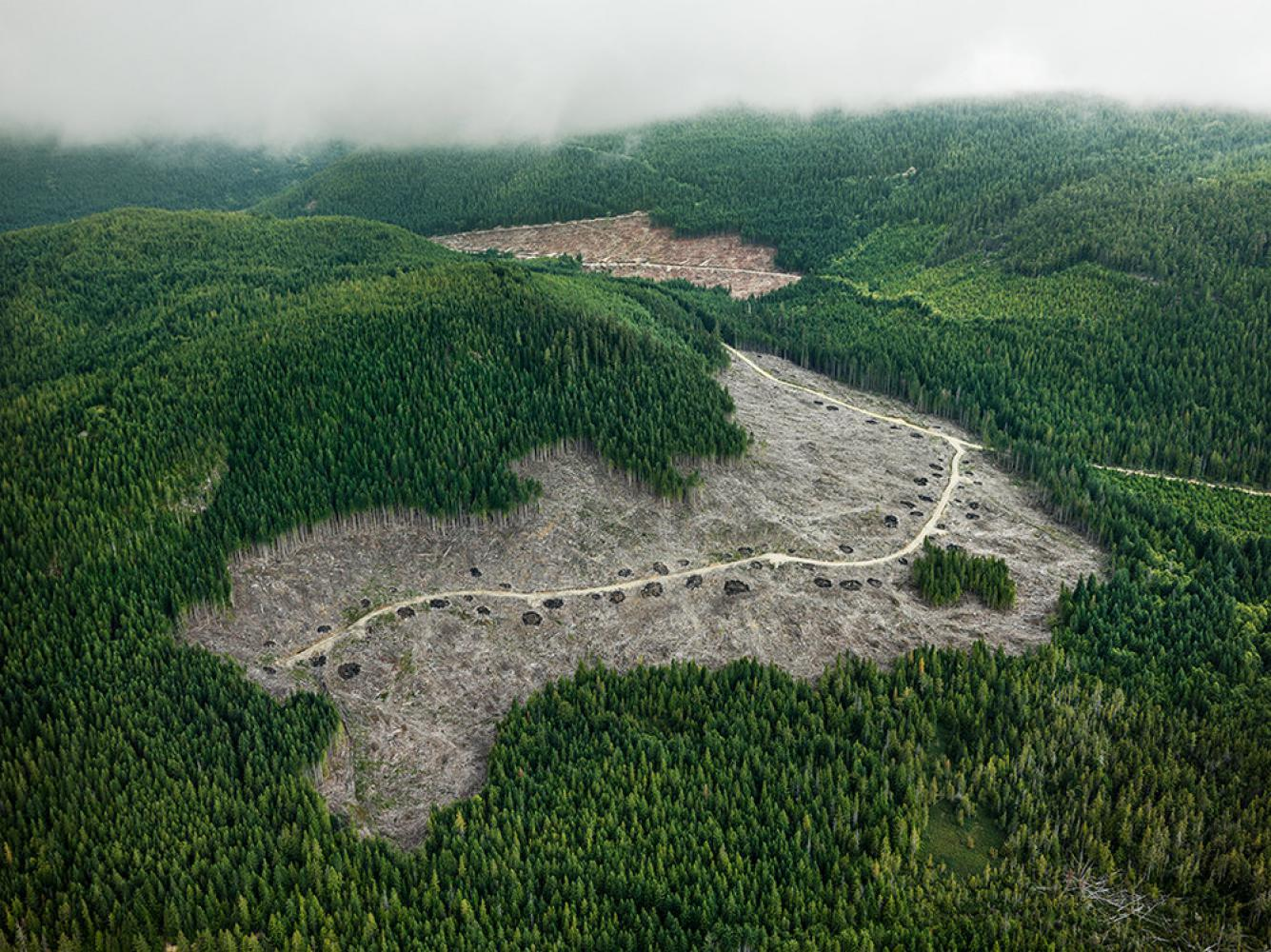 Foto: © Edward Burtynsky, courtesy Flowers Gallery, London/Metivier Gallery, Toronto